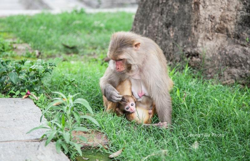 monkey pash