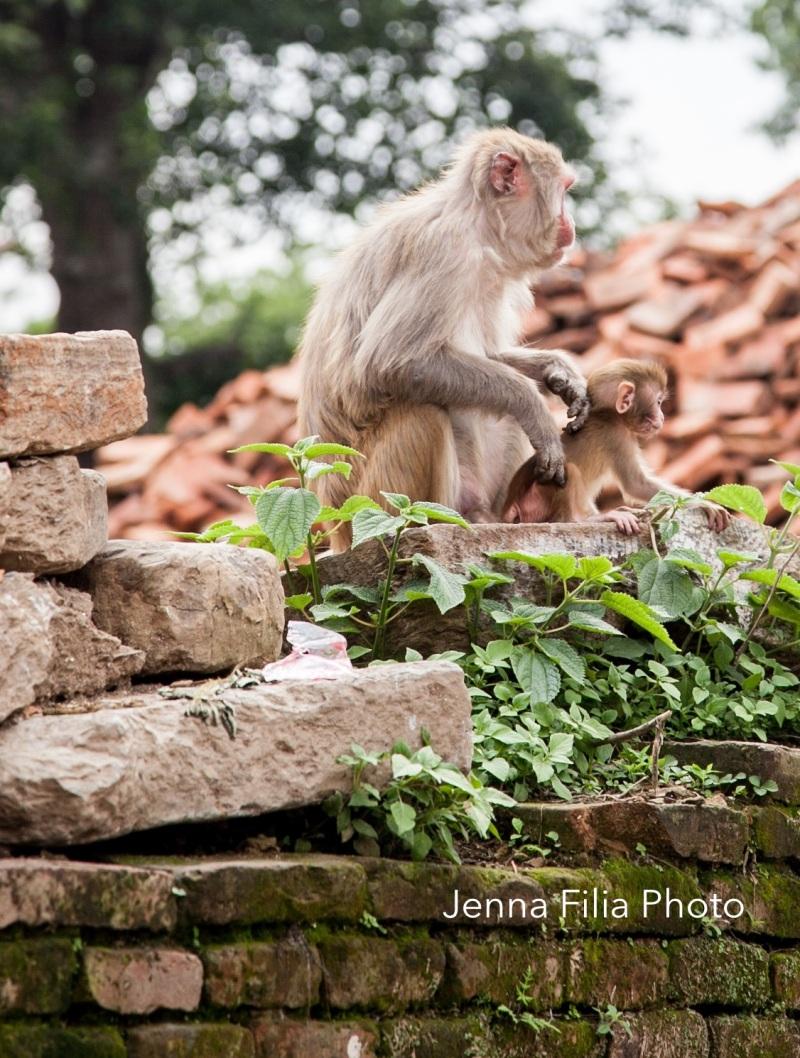 monkey pash2